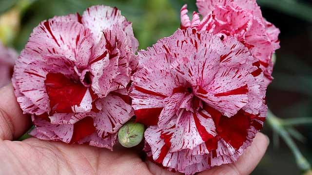 Spring gardening guide annies annuals mightylinksfo