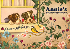 Annies Annuals Gift Certificate
