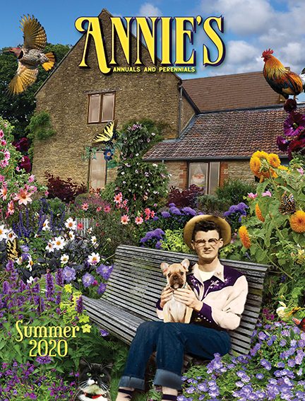 Annie S Annuals And Perennials Retail And Online Nursery Buy