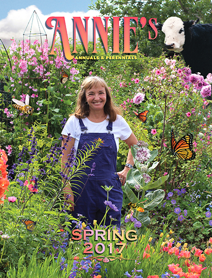 Annies Annuals and Perennials Retail and Online Nursery Buy