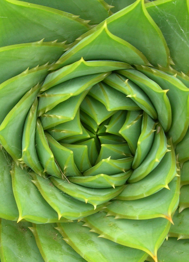 Planting Succulents In Ground
