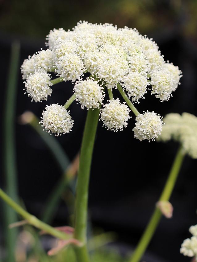 Shade Plants Perennial Zone 5