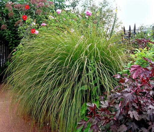 """Carex Virgata Seeds Carex Virgata """""""