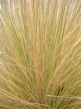 how to clear tussock grass