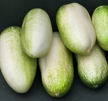Cucumber 'Long White