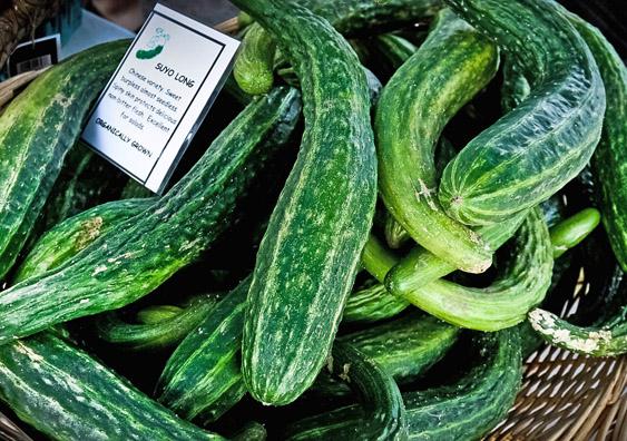 Cucumber  U0026 39 Suyo Long U0026 39