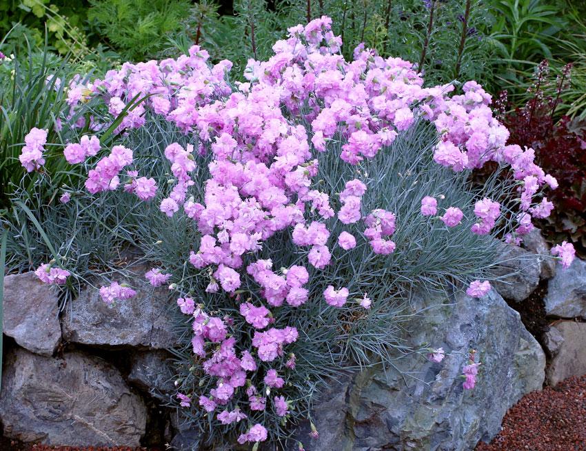 Purple Shade Plants