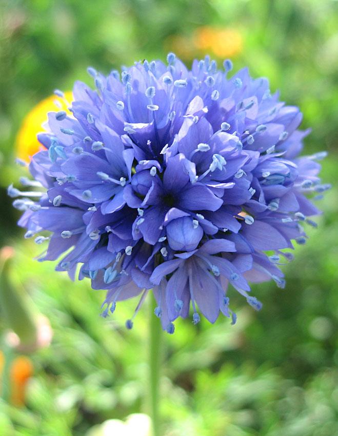 Tidy Tips Flower