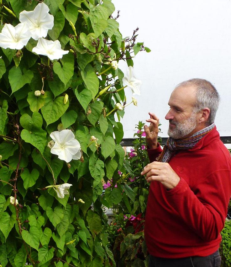 Ipomoea Alba Quot Moonflower Quot Buy Online At Annie S Annuals