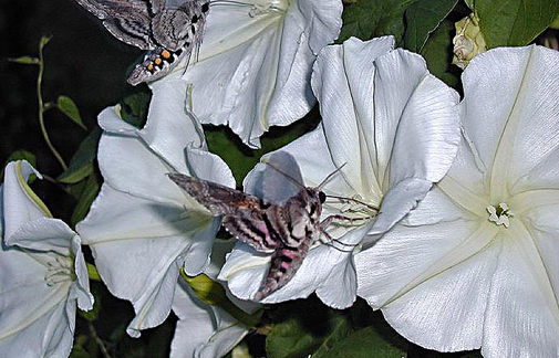 R solu jolies fleurs et belles plantes page 15 le forum sfr 664722 - Le comptoir du mirabilis ...