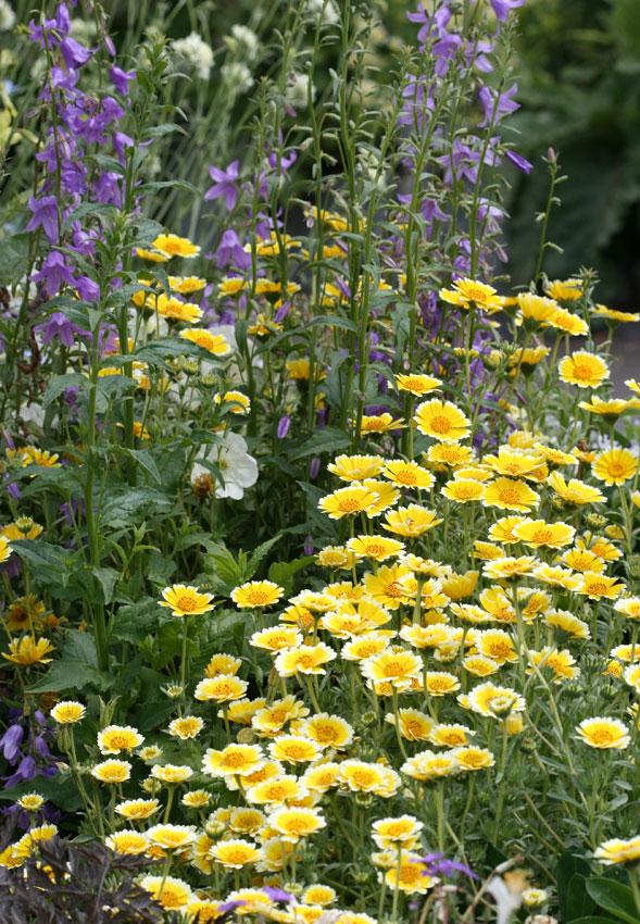 White Flower Perennials Full Sun