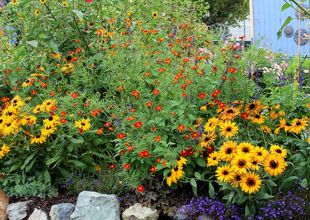 Marigold Garden Garden Ftempo