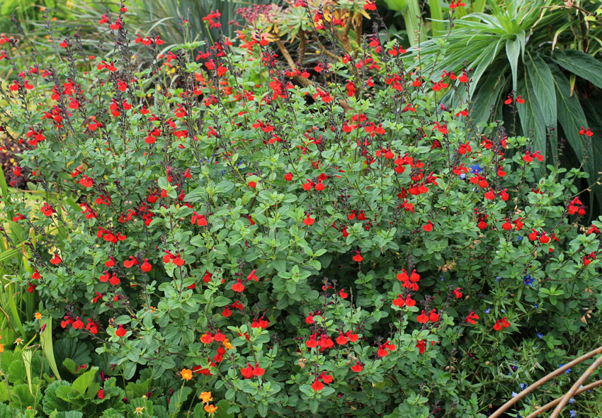 Image Result For Drought Tolerant Plants For California