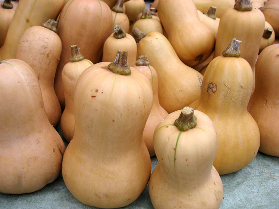 Winter Squash 'Metro' PMR