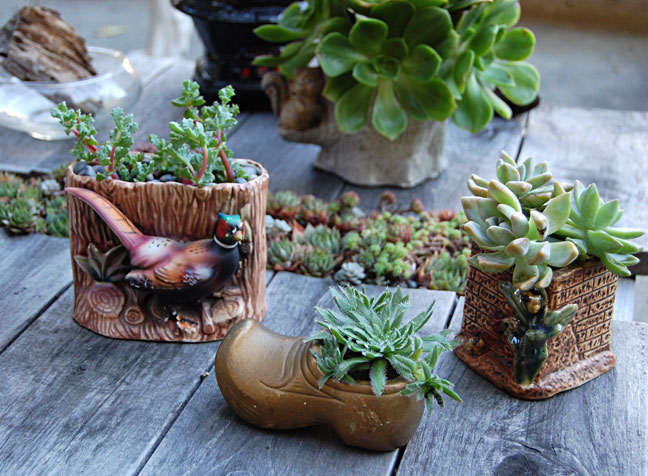 Annie S Annuals Perennials Super Gifty Succulent Containers