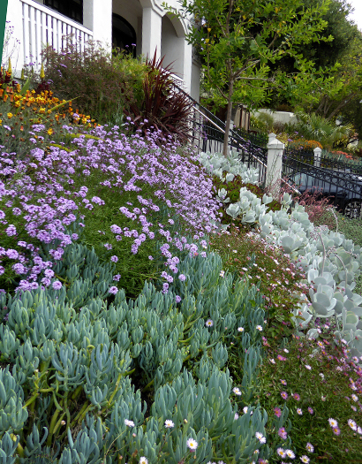 Annie S Annuals Perennials How To Cope With A Slope