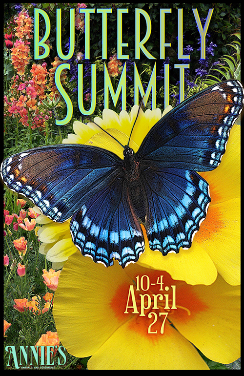Join us for our 3rd Annual<br/>BUTTERFLY SUMMIT!<br/>Saturday, April 27 from 10-4!
